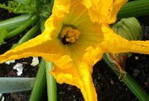 Bloemen en planten uit onze tuin