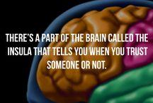 psycho=brain stuff
