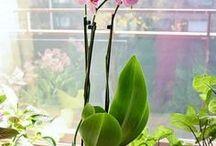 tanam bunga
