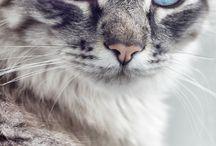 a bleu et gris