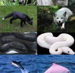 Melanism and Albinism