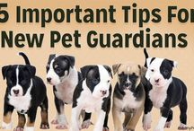 For New Dog Owners