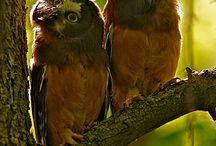 Owls / by Peggy Watson