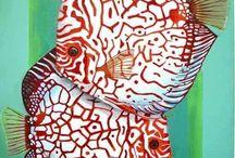 Peixes de Água Doce - Discos
