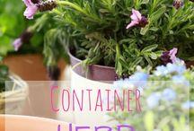 Container Gardening - Herbs