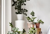 Plant grønt