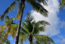 Caribbean Beaches / Plages Antilles