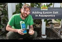 Aquaponics tips