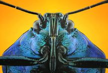 insect head / owady