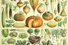 design - vegetables illustrations