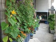 My garden / Idee per il mio giardino