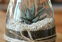 plantes grasses et plantes vertes