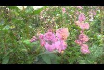 woodland harvest / wild food harvesting and recipes