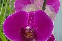 Orchids / Existe flor mais linda?