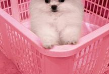 Too Cute / Awwwwwwwwwwwwwwwwwwwwwwwwwwww...