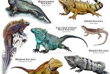 Reptils