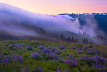 Foggy Impressions / by Adeline Nobel