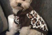 Lufi / My puppy... <3