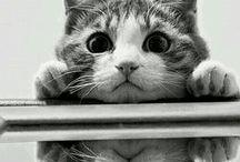 cat.cat.