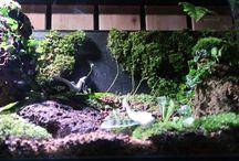 Moss terrarium layout