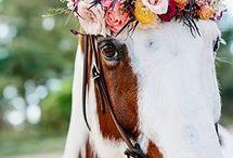 horseys ✽