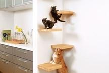 Essentials for a crazy cat lady