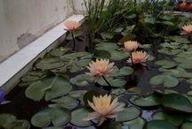 Water Lily / by Anurag Jagdhari
