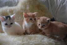 Kittens / by Crystal Hickey