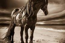 Nádherné foto koní
