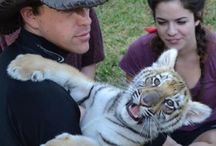 Animal Encounters / Experience a tiger cub encounter at Dade City's Wild Things fulfill your dream to pet and play with a tiger cub