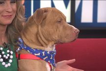 Adopt a Pet! / The Humane Society of West Michigan animals are all up for adoption!!