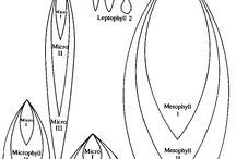 jewelry design_template
