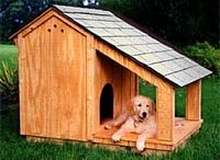 Dog House / by Grace Yeung