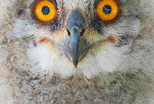 Owls | Eyeshine Photography / Owl by Eyeshine Photography.