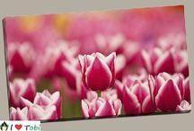 Tablouri flori / Tablouri online cu flori ideale pentru interioare decorate cu gust si armonie. Descopera colectia Tobi cu tablouri canvas cu flori. Livrare gratuita, calitate premium.