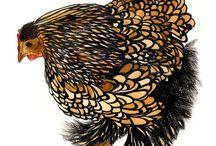 Plumípedos / Aves, búhos, gallos y gallinas / by Virginia Hernández