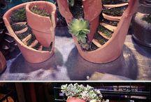 Saksı ve bitkiler