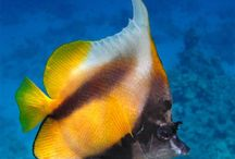 Red Sea / Underwater beauty at Red Sea Egypt.