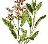 herbs/ essential oils