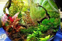 Akvaryum bitkileri
