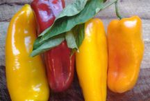 Summatime! / All of our favorite summer veggies, full of color and flavor!