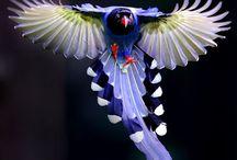 Birds - Exotic