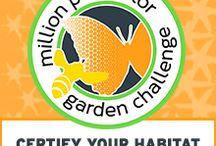 Gardening: Pollinator Garden