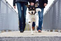 Philadelphia Pet Photography / Best Pet Photos!