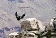I Love Birds of Prey / ~ Bird ~ Wing ~ Feather ~ Air ~ Flight ~ Free ~ Soar ~ Glide ~ Rise ~ Ascend ~ Lift ~ Magnify ~