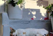 Animals / Cats