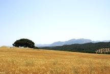 Andalucía / La mejor tierra del mundo, con la mejor gente, clima, gastronomía, cultura,...