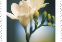Picking Flowers / by U.S. Postal Service