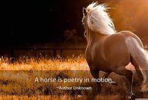 Citate despre cai