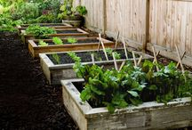 My Future Garden+Patio / by Kimberly Leonard